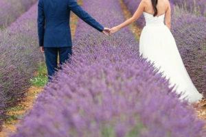 Photos mariage champs de lavande